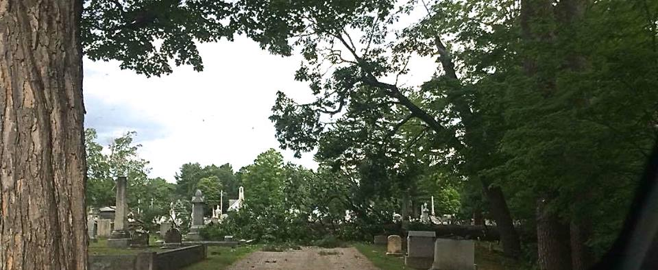 Trees And Wires Downed By Saturday Storm
